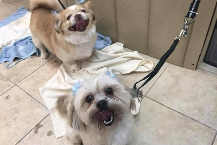 Pet Friendly Grooming Tails