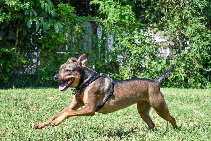 Pet Friendly South Florida Pet Sitter