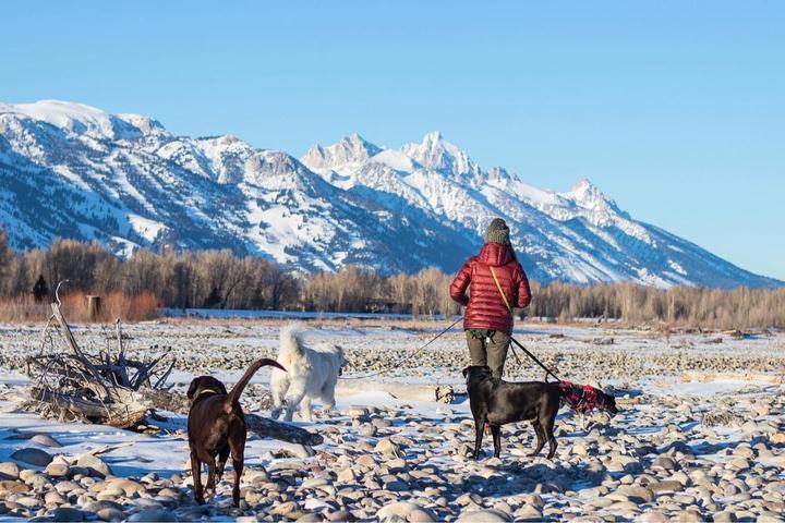 Pet Friendly Jackson Powder Hounds