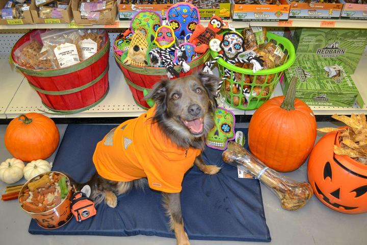 Pet Friendly Ideal Pet Stop & Grooming
