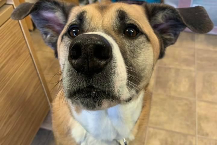 Pet Friendly Humane Society Yukon-Mae Bachur Animal Shelter