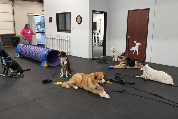 Pet Friendly Rockin' E Dog Training & Consulting