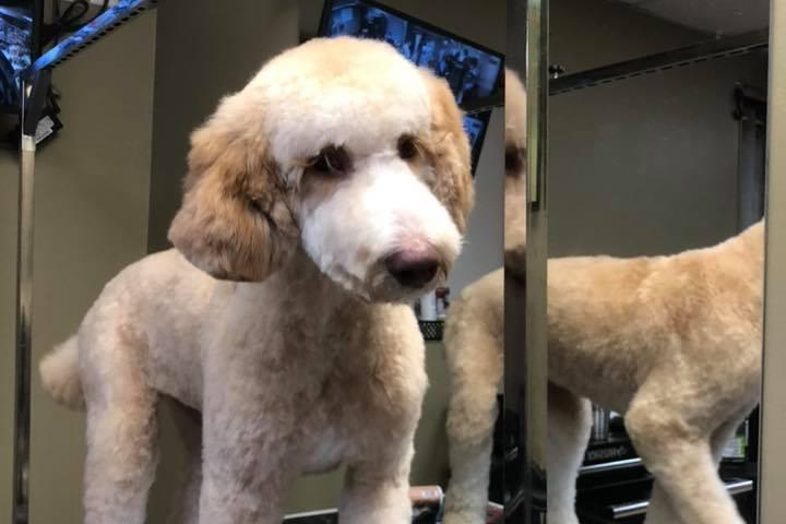 Pet Friendly Waggy Tail Grooming & Pet Resort