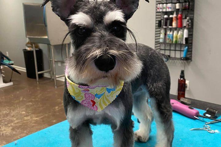 Pet Friendly Knotty Dog Spa & Boutique