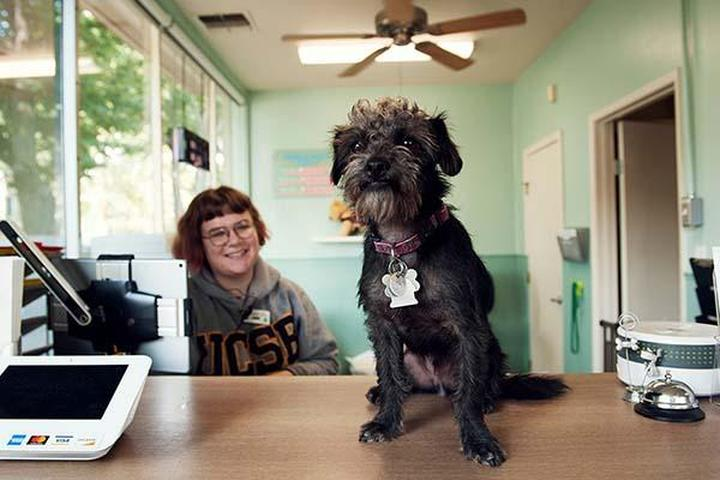 Pet Friendly Grateful Dog