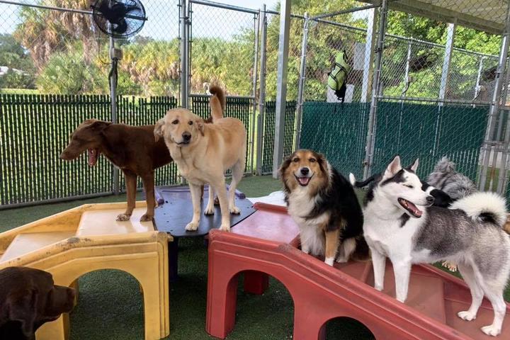 Pet Friendly Bayside Pet Resort