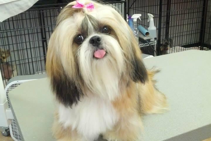 Pet Friendly Honolulu Dog Spa