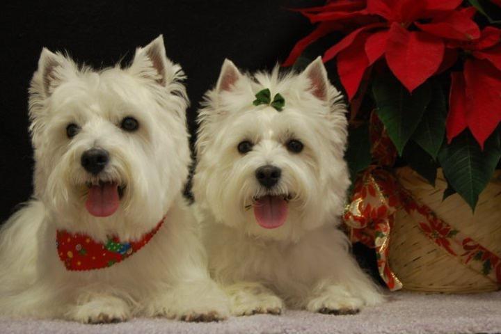 Pet Friendly Bubbles and Bows Pet Spa and Boutique