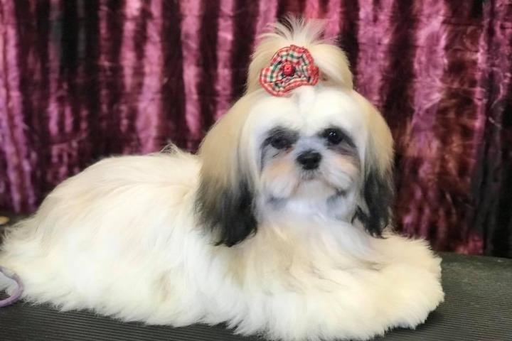 Pet Friendly Dog's Day Bowtique Grooming Salon