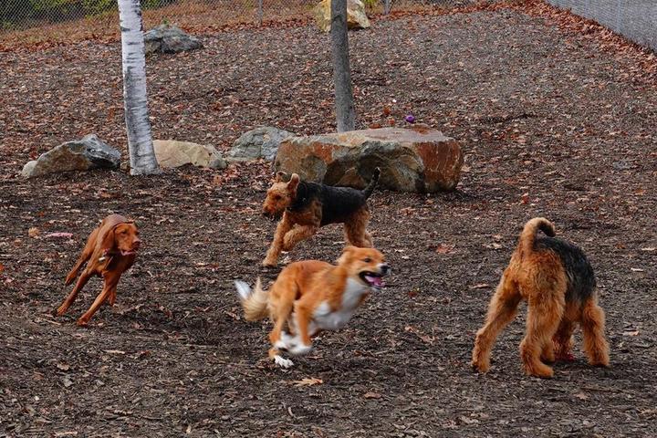 Pet Friendly Lezama Family Happy Tails Dog Park