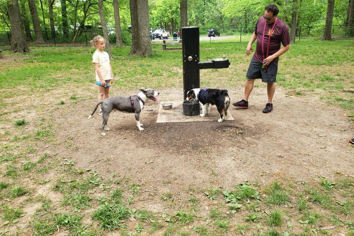 Pet Friendly Madison Dog Park