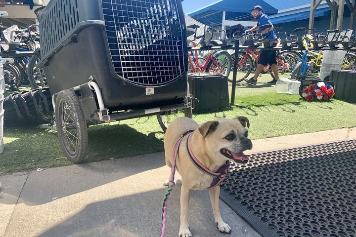 Pet Friendly Mackinac Island Bike Shop