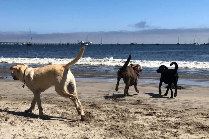 Pet Friendly Olde Port Beach