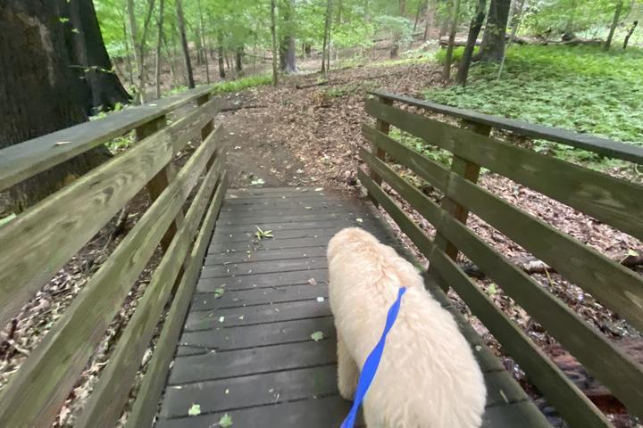 Pet Friendly Holmdel Park