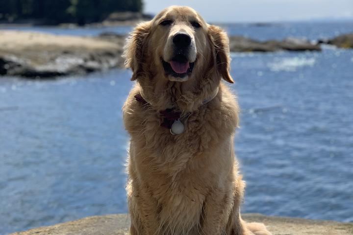Pet Friendly Botanical Beach