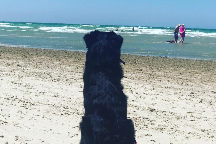 Pet Friendly Outlet Beach Parking