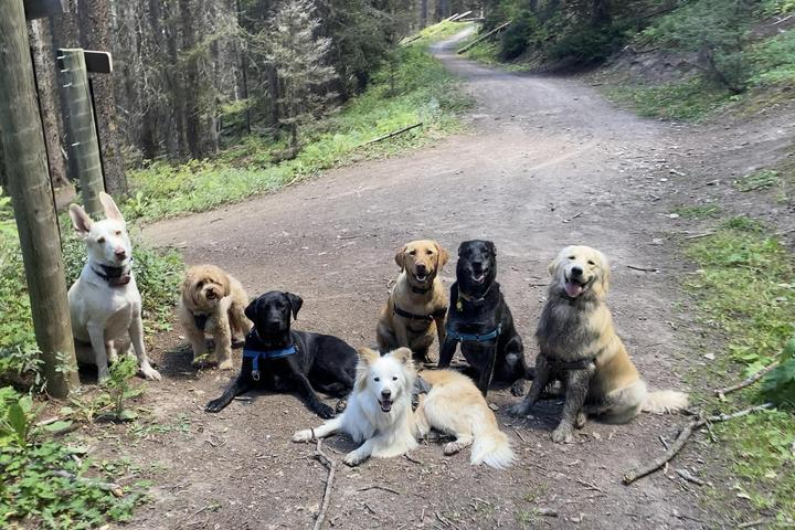 Pet Friendly Telluride K9 Adventures