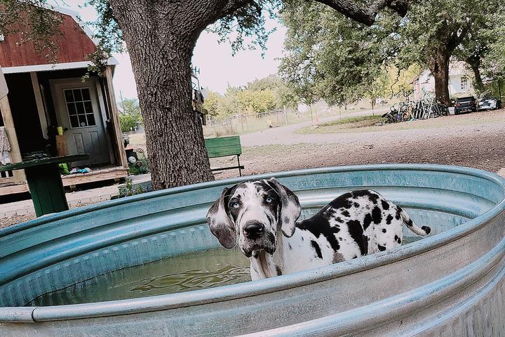 Pet Friendly Doggyfix llc