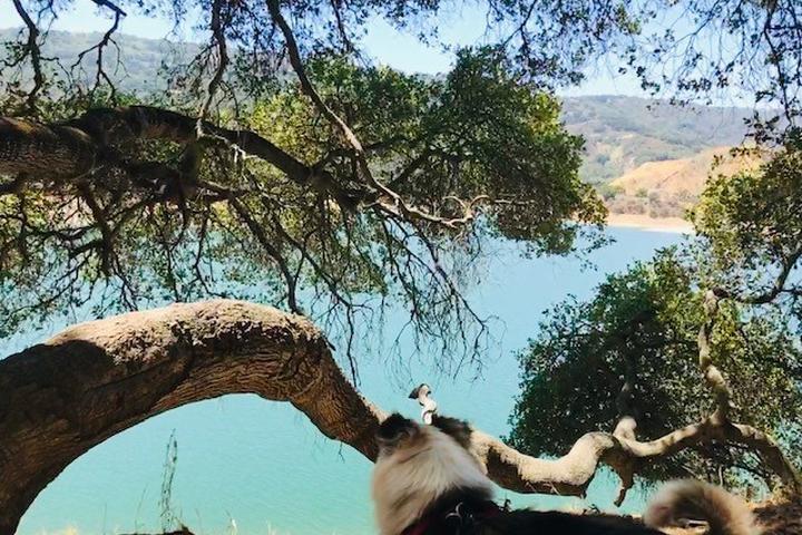 Pet Friendly Stevens Canyon Trail