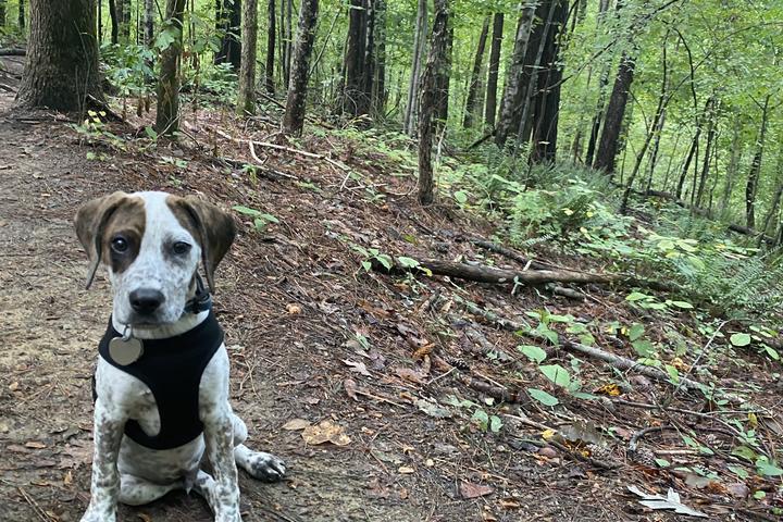 Pet Friendly Cascades Preserve