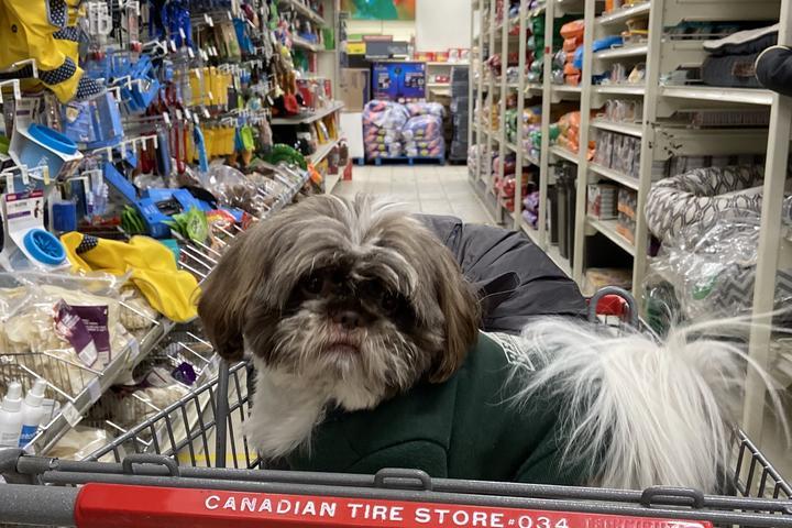 Pet Friendly Canadian Tire