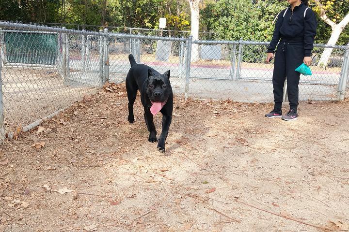 Pet Friendly Claremont Pooch Dog Park