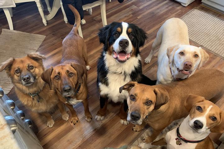 Pet Friendly Blissful Wags, LLC