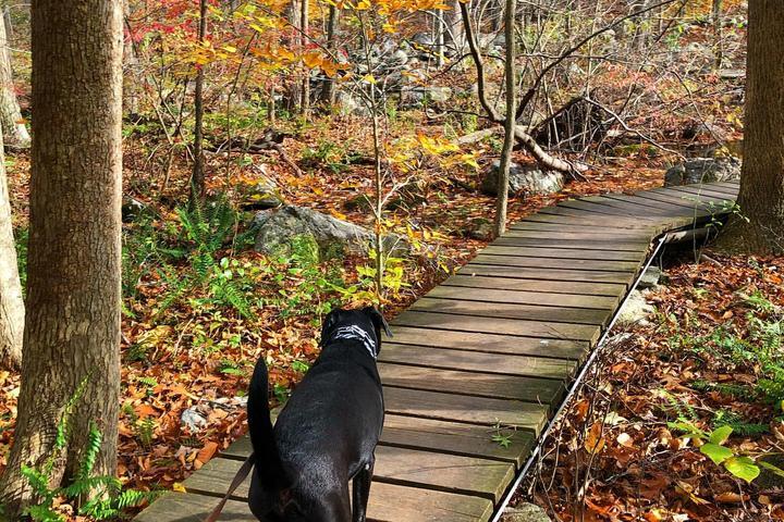 Pet Friendly Bartlett Arboretum & Gardens