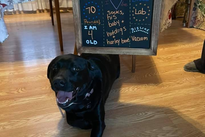Pet Friendly Your Visiting Veterinarian LLC