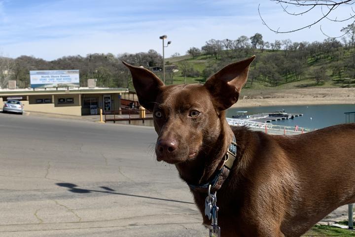 Pet Friendly Camanche Recreation Company