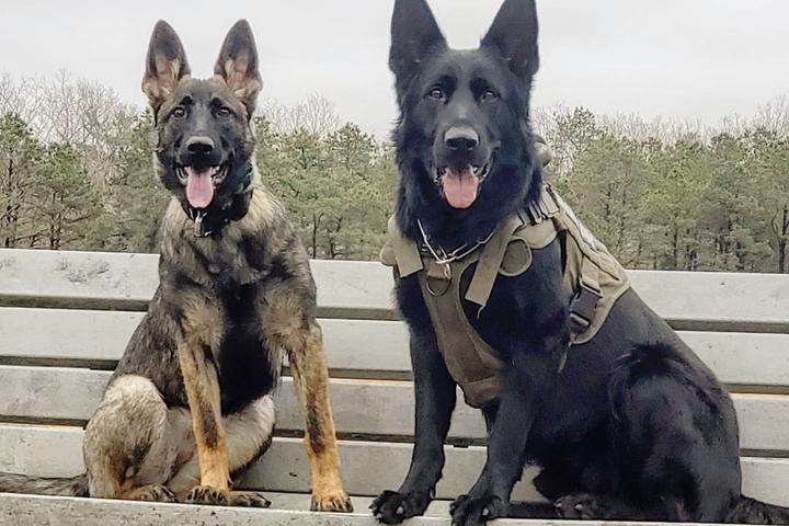 Pet Friendly Krushk9 Dog Training Services LLC