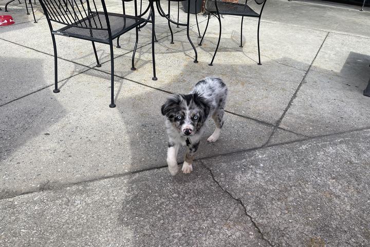 Pet Friendly Tavern At Medlock