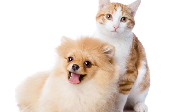 Pet Friendly Pawhuddle Pet Waste Removal Services