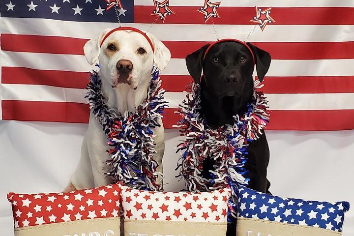 Pet Friendly 4th of July Dog Parade