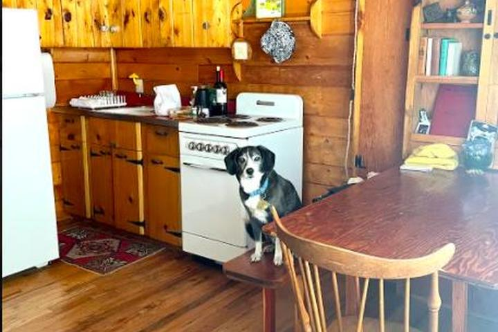 Pet Friendly Flying Moon Cabins