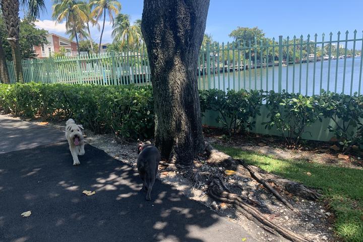 Pet Friendly Waterways Dog Park