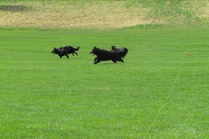 Pet Friendly Fastpaws Dogsports LLC