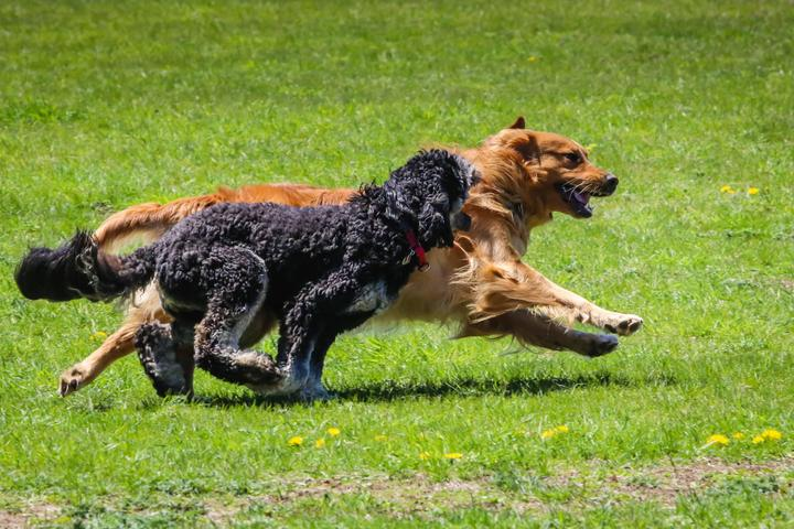 Pet Friendly Country Canines Play Park Metcalfe
