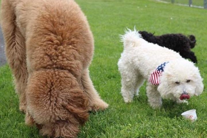 Pet Friendly Allamuchy Dog Park Members Ice Cream Social