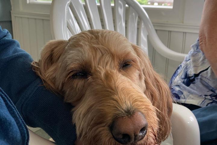 Pet Friendly Lazy L at Willow Creek Bed & Breakfast