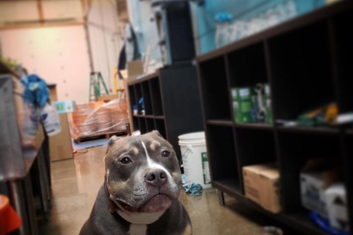 Pet Friendly Apex Brewery