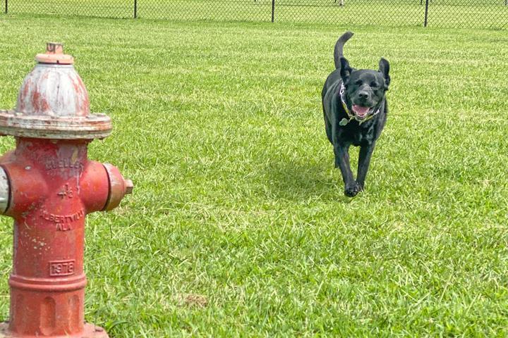 Pet Friendly Smithfield Dog Park
