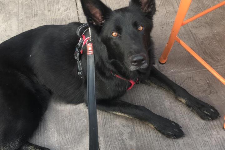Pet Friendly Black Tooth Brewing Company