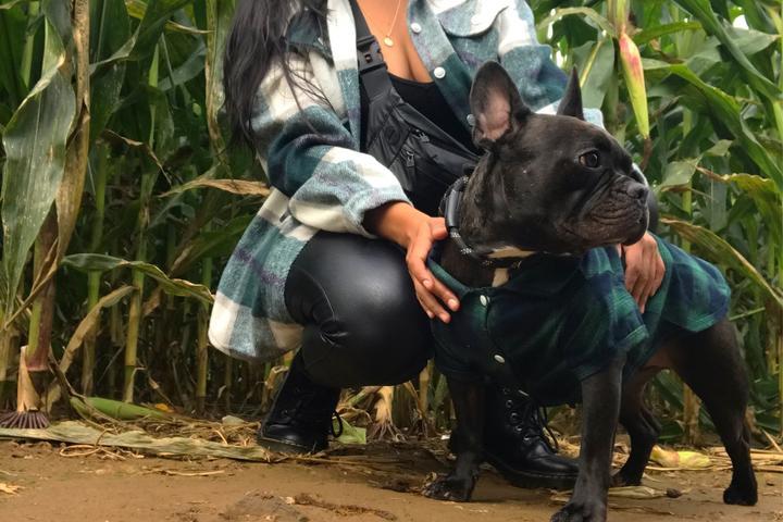 Pet Friendly Fall Festival at Ort Farms