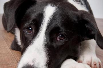 Pet Friendly Boston Dog Photography