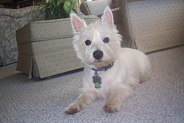 Pet Friendly Aunt Darlene's Pet Sitting & Dog Walking Service,