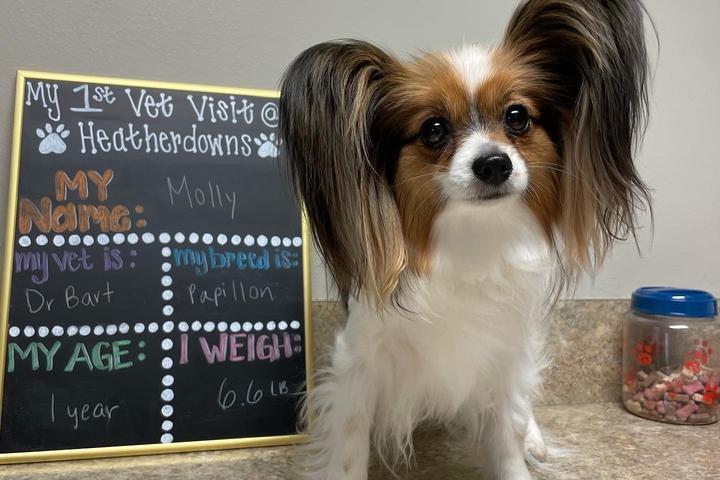 Pet Friendly Heatherdowns Veterinary Clinic