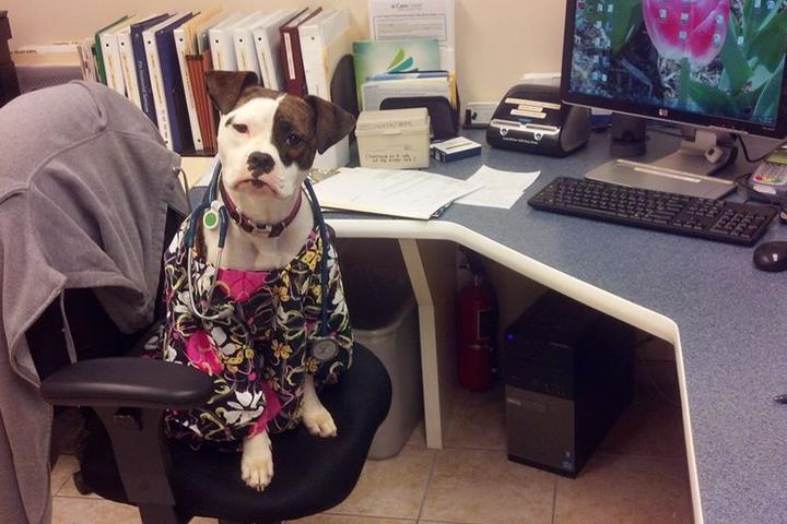 Pet Friendly Emergency Animal Hospital of Ellicott City