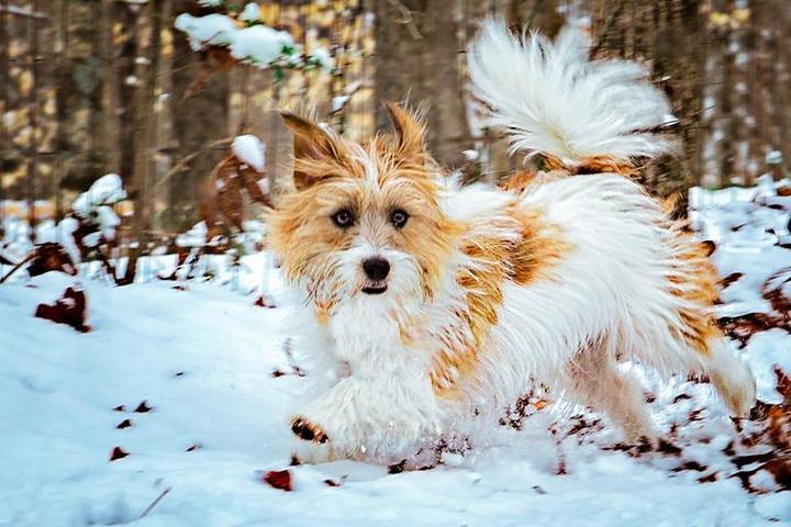 Pet Friendly Fur Real Pet Photography