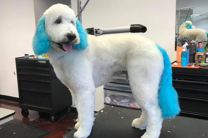 Pet Friendly Amy's Grooming Salon